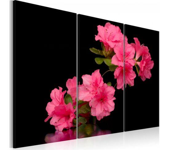 Tableau Fleur De Cerisier Rose 60 X 40 Cm
