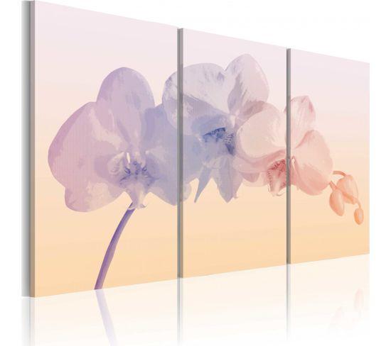 Tableau Orchid Spectrum 120 X 80 Cm