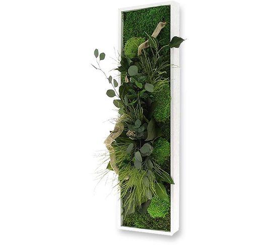Tableau Végétal Nature Panoramic Avec Plantes Stabilisées 20 x 70 cm