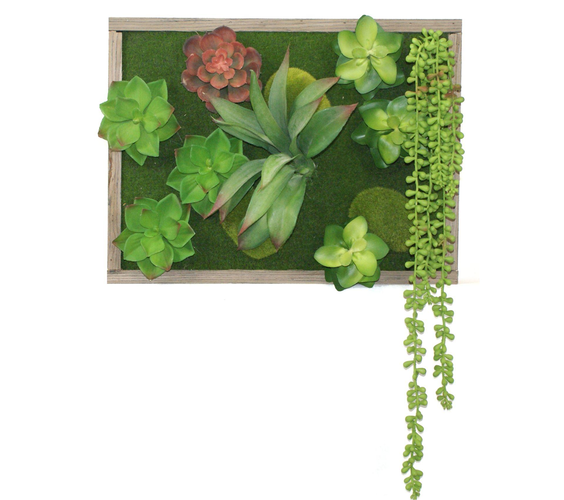 Tableau Végétal Mural Avec Plantes Grasses Et Cadre Bois - 40x30cm